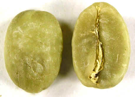 Home Roasting Green Beans